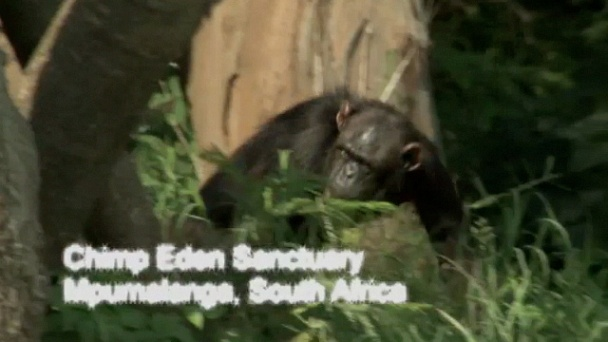 Escape to Chimp Eden: Growing Pains for the Infants: Watch the Full Episode Now