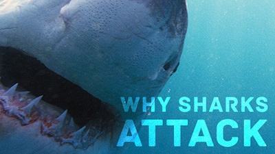 Nova: Why Sharks Attack: Watch the Full Episode Now
